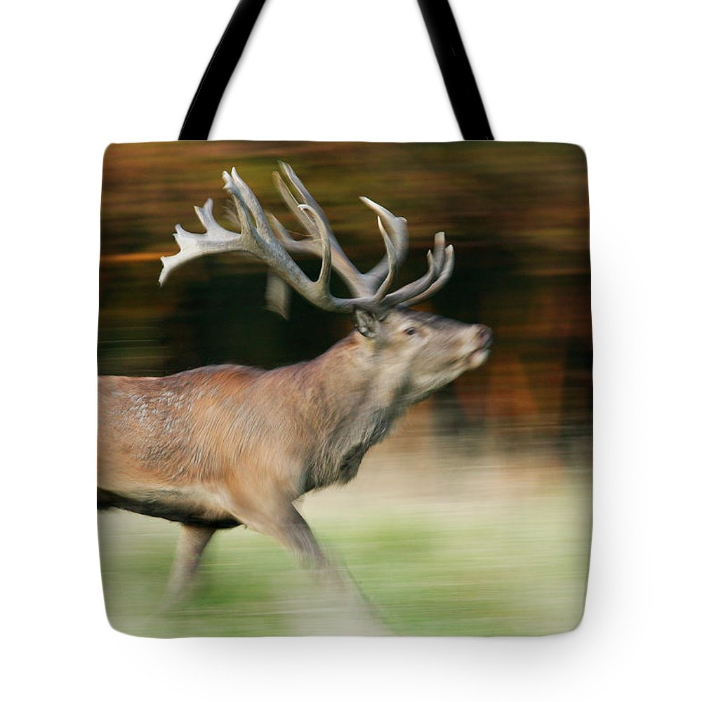 Jh Tote Bag featuring the photograph Red Deer Cervus Elaphus Stag Running by Cyril Ruoso