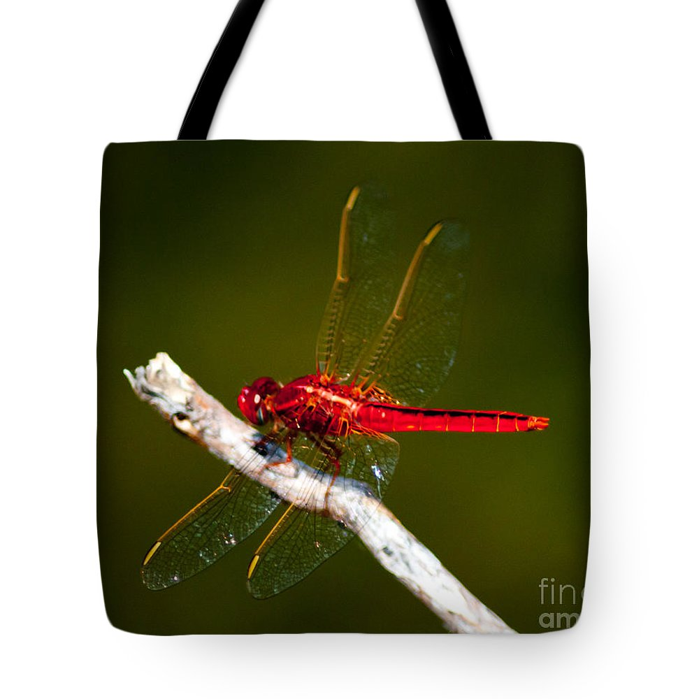Dragonfly Tote Bag featuring the photograph Red Dragonfly by Stephen Whalen