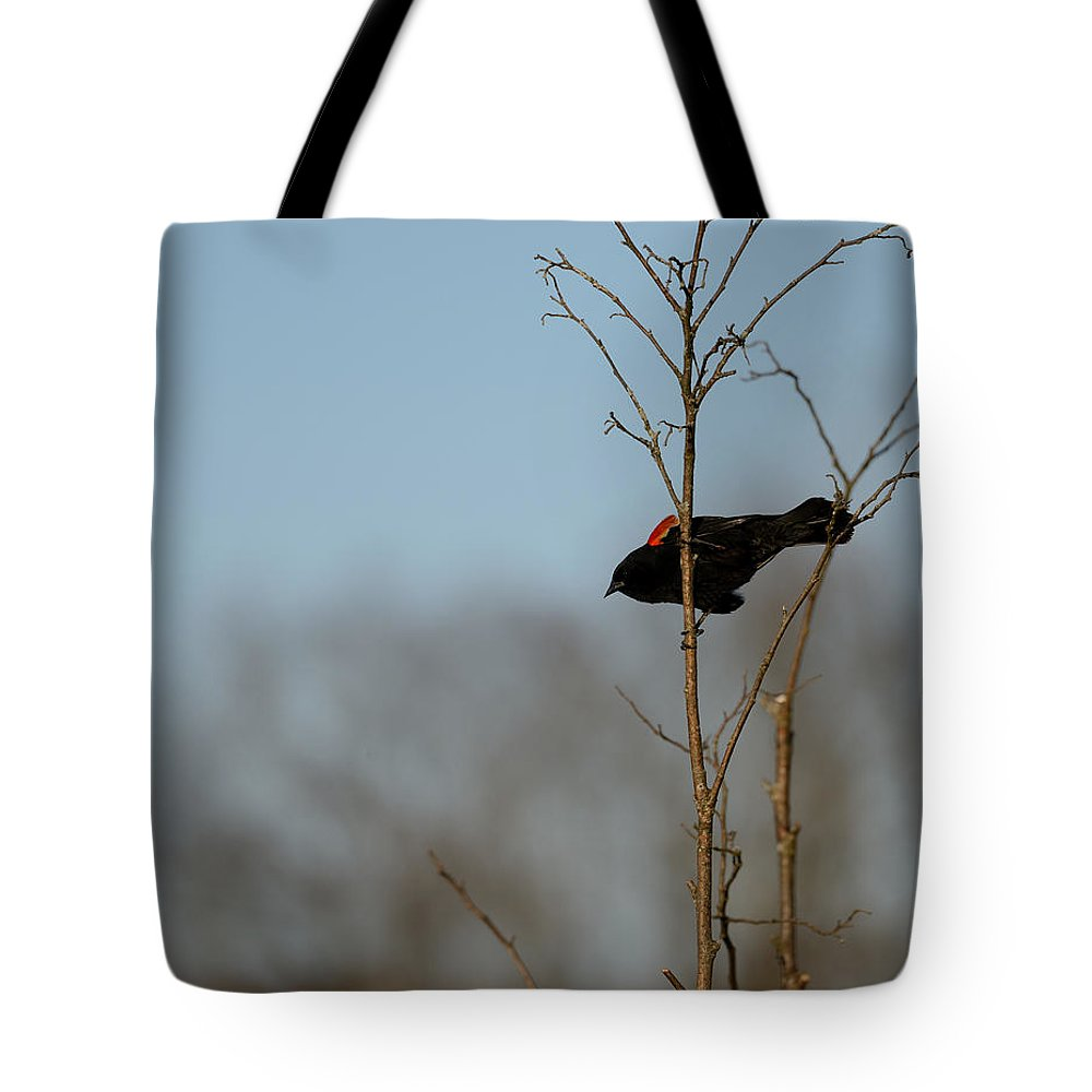 Red-winged Blackbird Tote Bag featuring the photograph Red Epaulets by Ian Ashbaugh