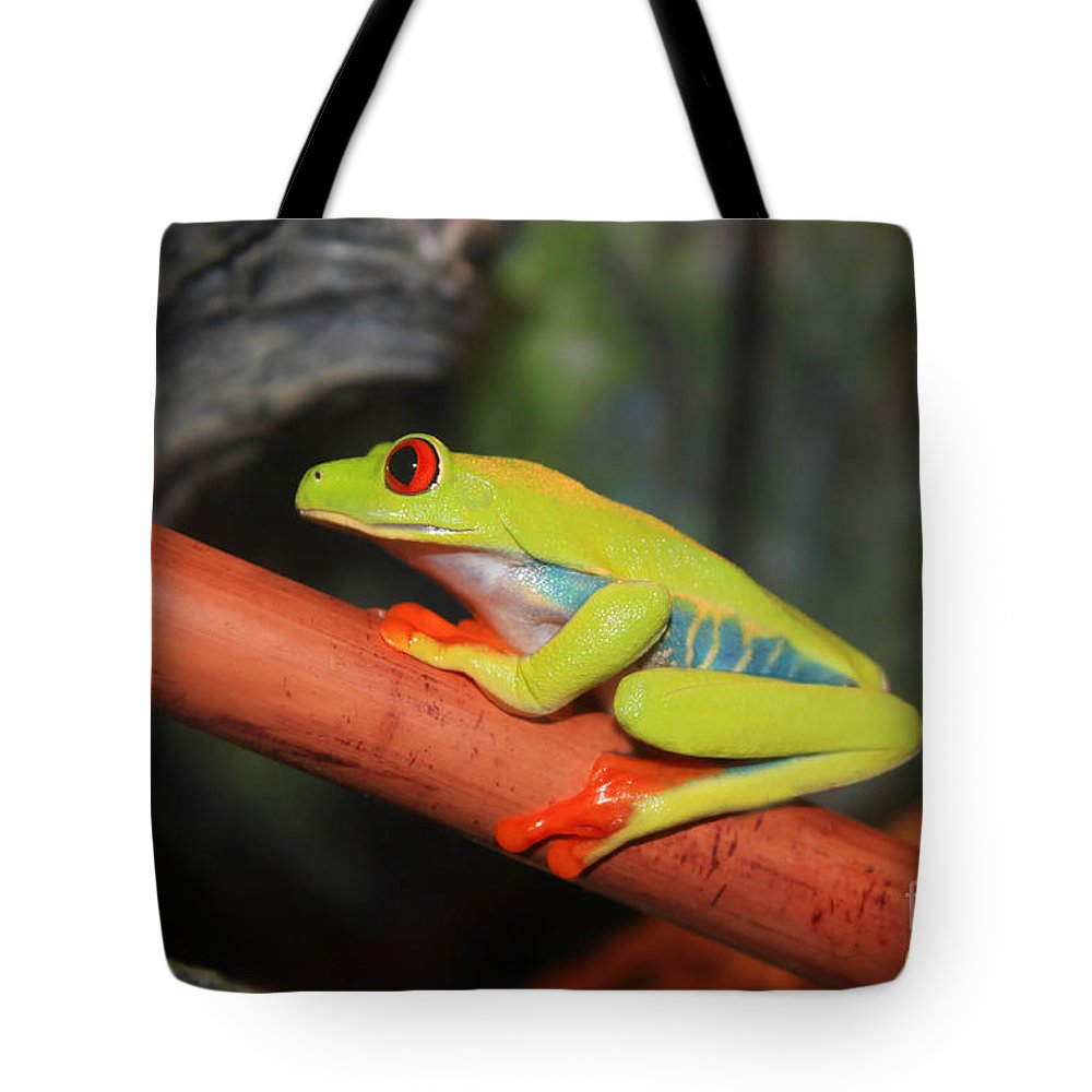 Red Eyed Tree Frog Tote Bag featuring the photograph Red Eyed Tree Frog by Cathy Beharriell