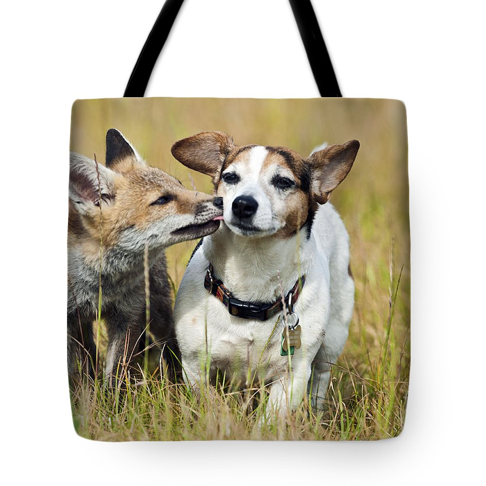 Red Fox Tote Bag featuring the photograph Red Fox Cub With Jack Russell by Brian Bevan
