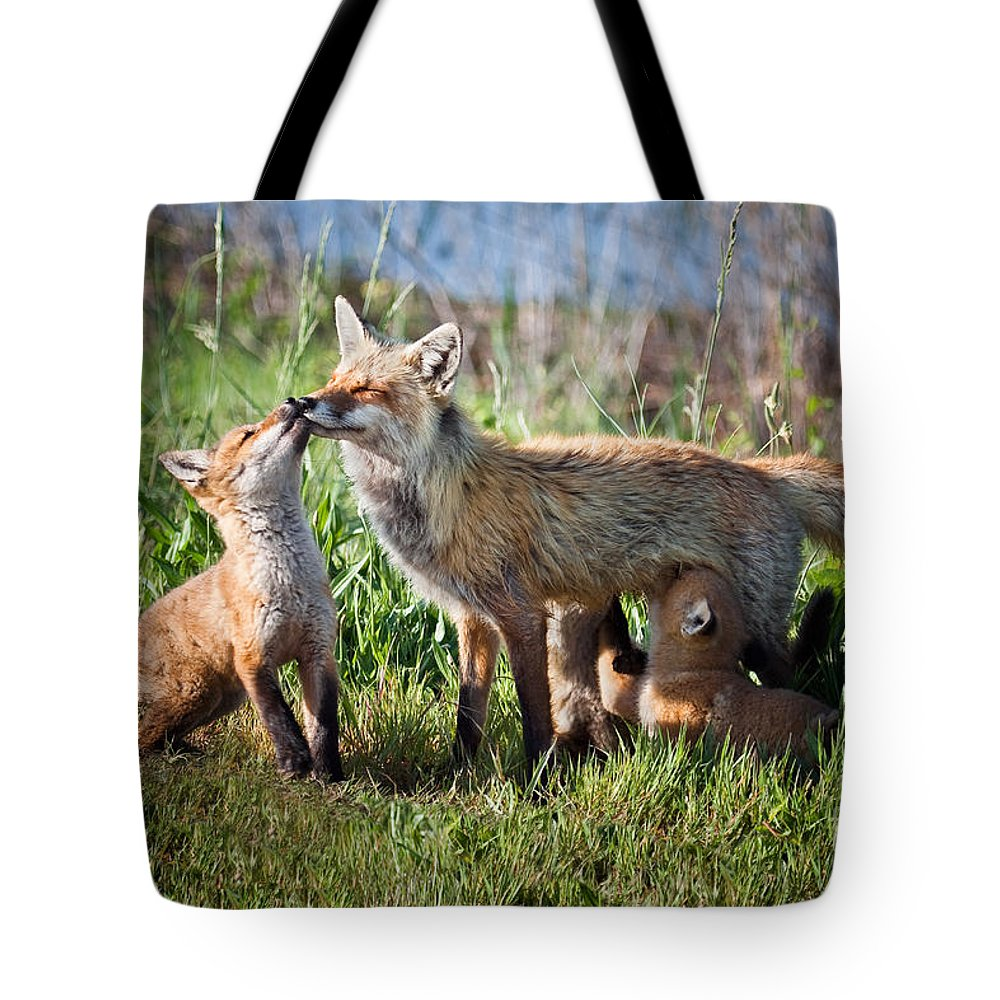 Award Winning Tote Bag featuring the photograph Red Fox Family by Ronald Lutz