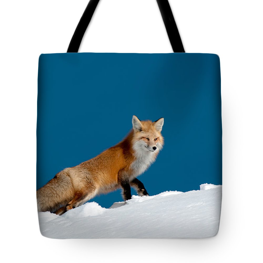 Red Fox Tote Bag featuring the photograph Red Fox by Gary Beeler