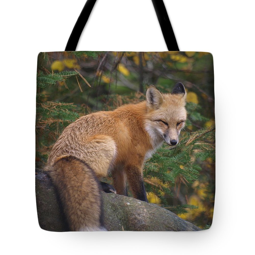 Foxes Tote Bag featuring the photograph Red Fox by James Peterson