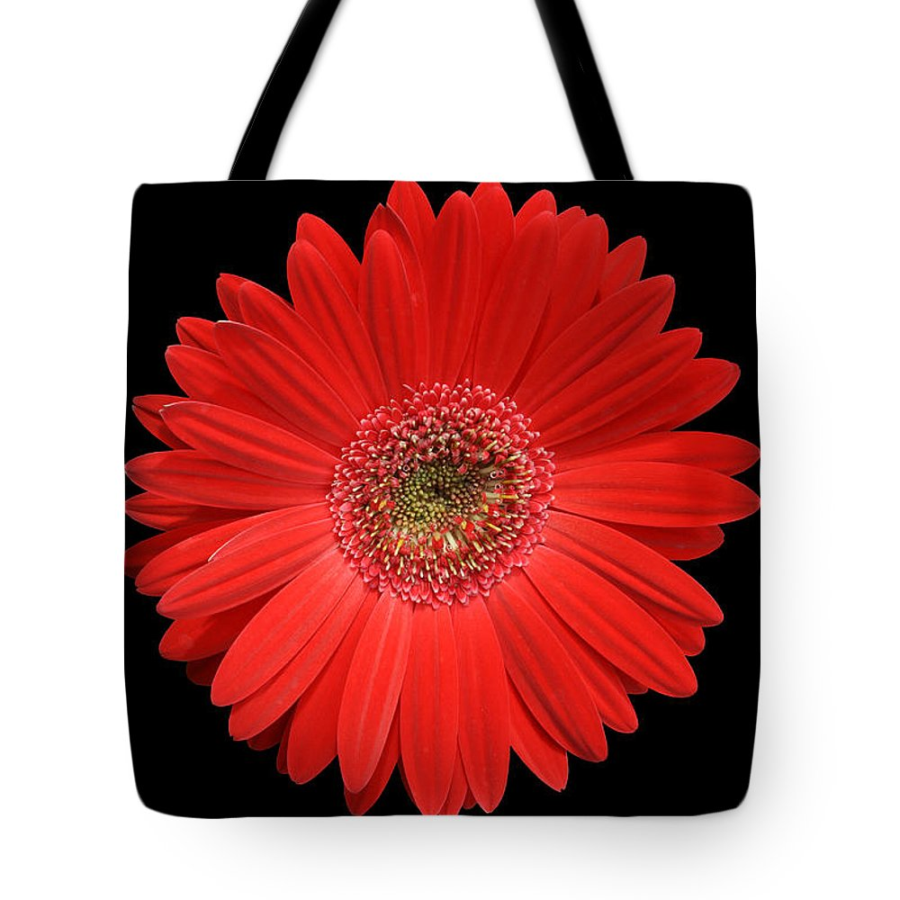 Gerbera Tote Bag featuring the photograph Red Gerber Daisy #2 by Judy Whitton