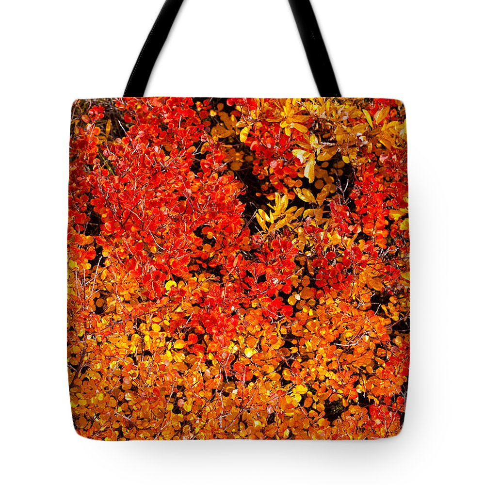 Salix Tote Bag featuring the photograph Red-golden Alpine Shrubs by Stephan Pietzko