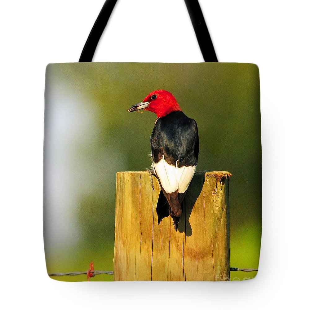 Nature Tote Bag featuring the photograph Red-headed Woodpecker by Olivia Hardwicke