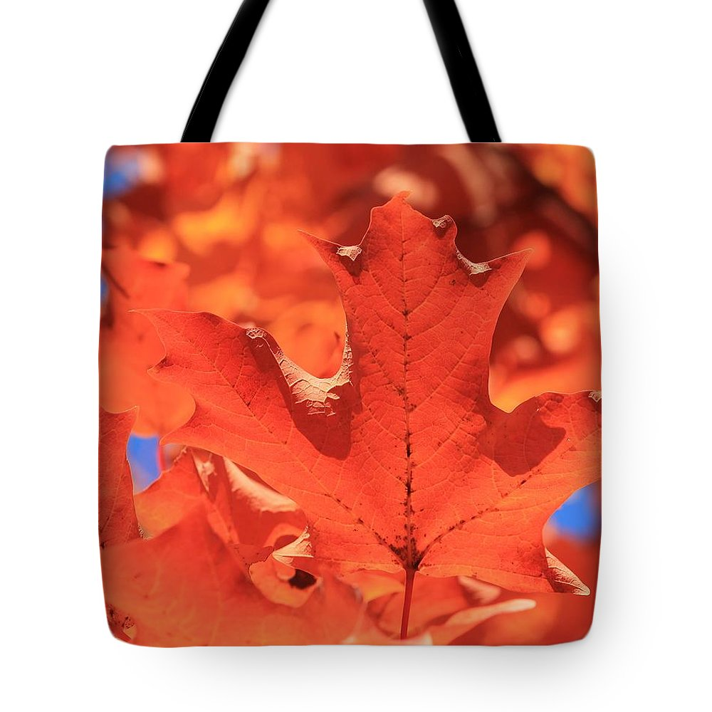 Maple Leaves Tote Bag featuring the photograph Peak Color Maple Leaves by Michael Saunders