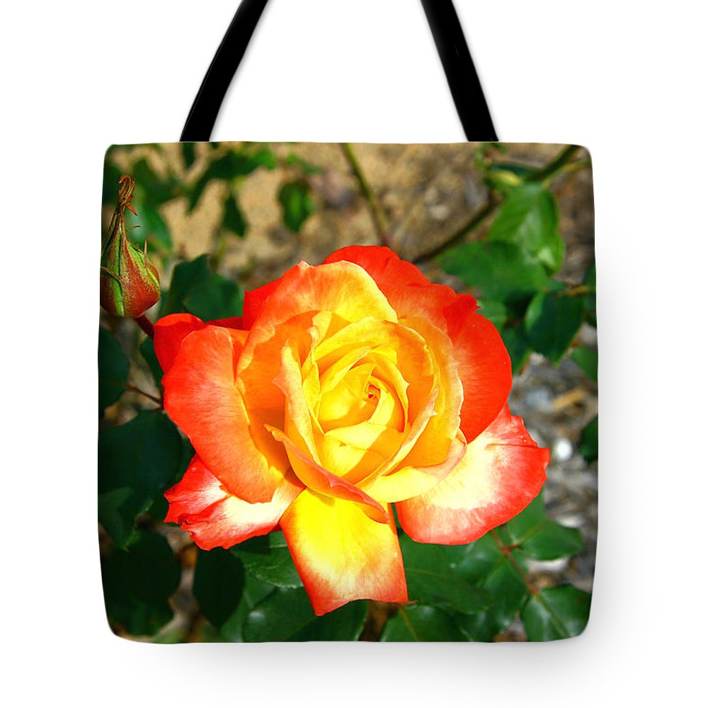 Red Tote Bag featuring the photograph Red Orange And Yellow Rose by Darren Burton