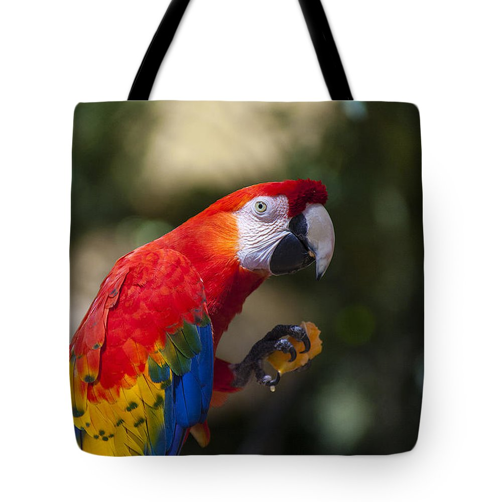 Parrot Tote Bag featuring the photograph Red Parrot by Garry Gay