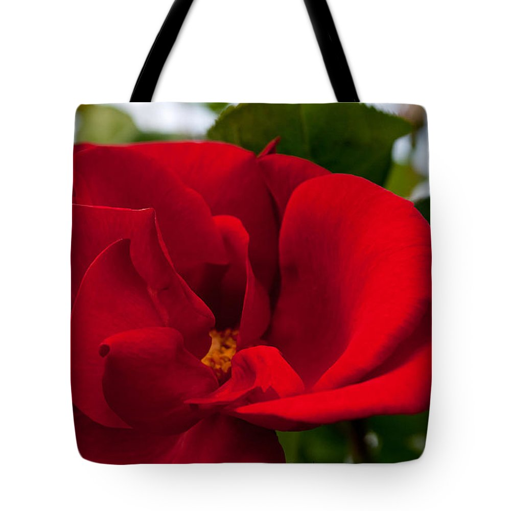Red Rose Tote Bag featuring the photograph Red Passion by Tikvah's Hope