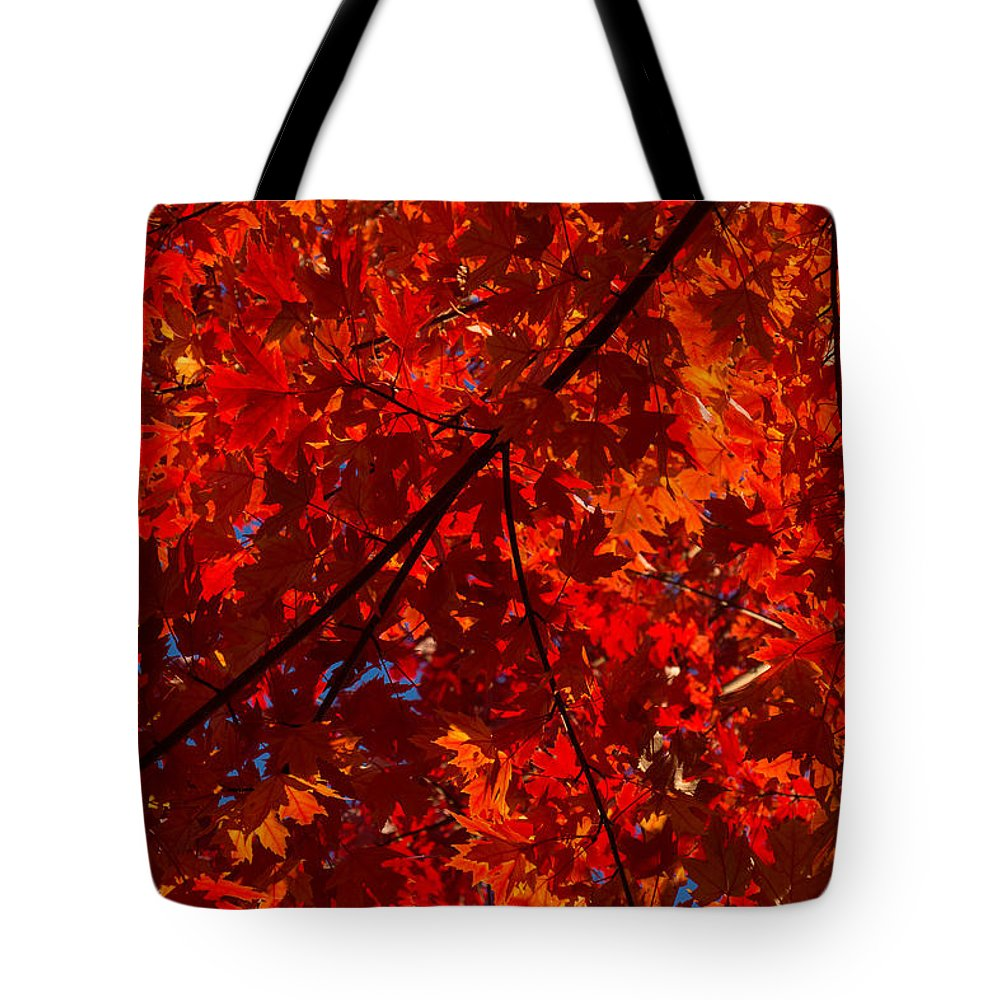 Red Tote Bag featuring the photograph Red Red And Red by Georgia Mizuleva
