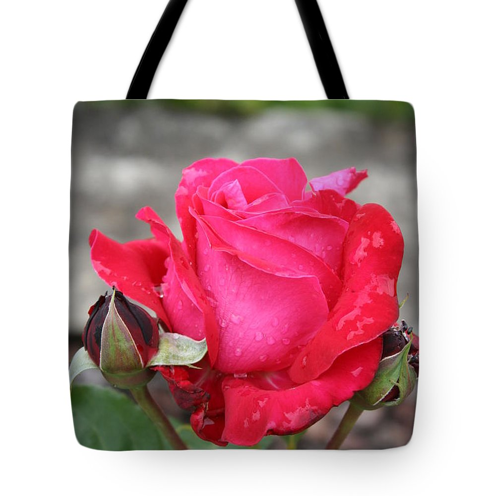 Rose Tote Bag featuring the photograph Red Rose And Dewtrops by Christiane Schulze Art And Photography