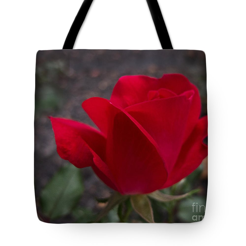 Rose Tote Bag featuring the photograph Red Rose by Arlene Carmel