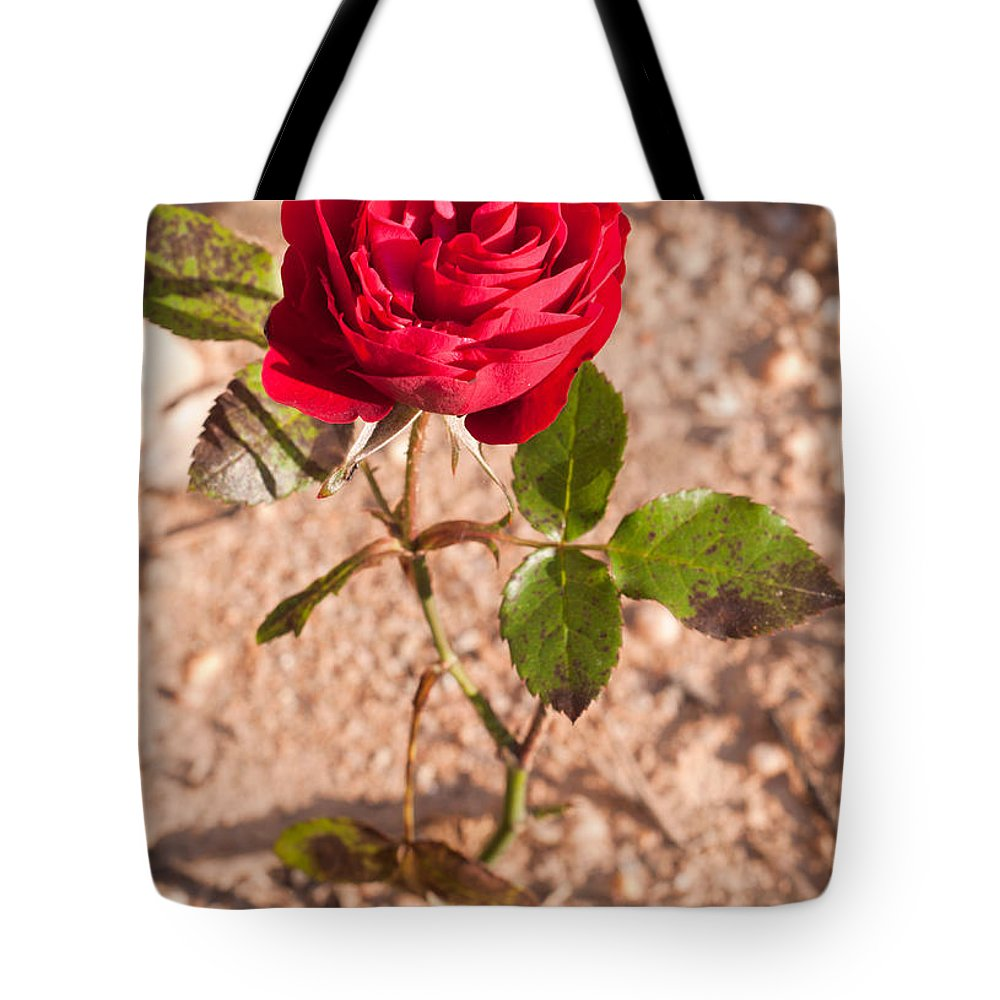 Rose Tote Bag featuring the photograph Red Rose by Luis Alvarenga