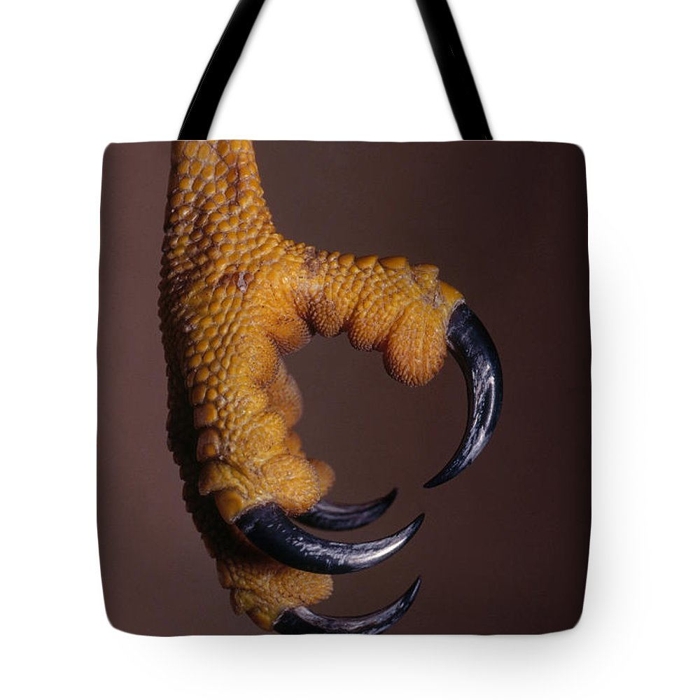 Red-shouldered Hawk Tote Bag featuring the photograph Red-shouldered Hawk Talons by Jim Zipp