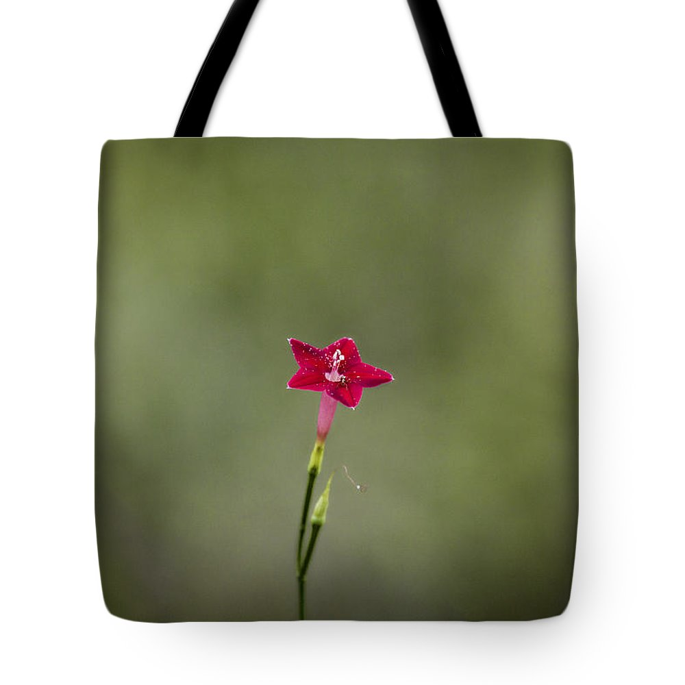 Red Tote Bag featuring the photograph Red Simplicity V2 by Douglas Barnard
