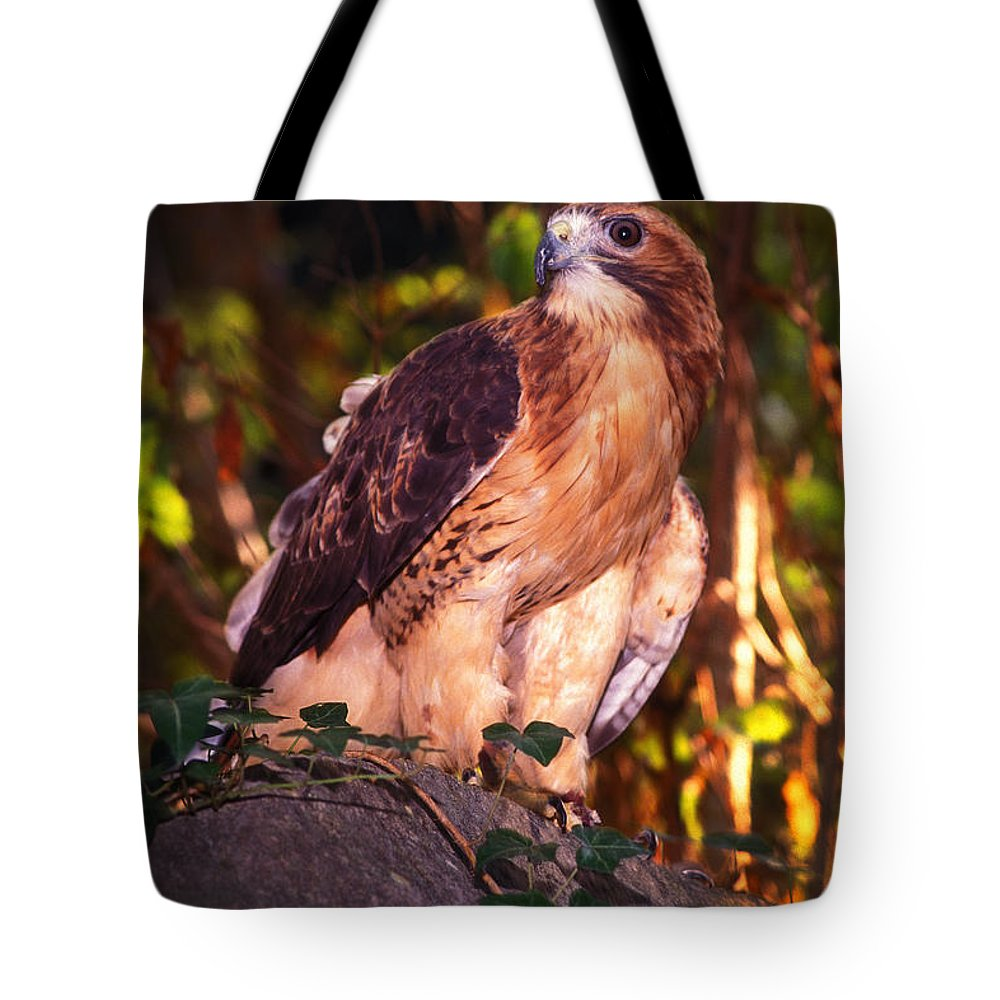 Hawk Tote Bag featuring the photograph Red Tailed Hawk - 53 by Paul W Faust - Impressions of Light