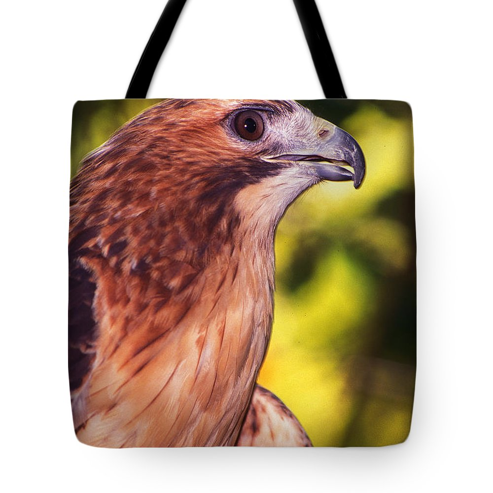 Hawk Tote Bag featuring the photograph Red Tailed Hawk - 59 by Paul W Faust - Impressions of Light