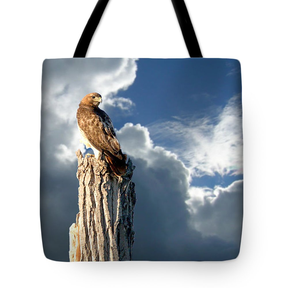 Roy Williams Tote Bag featuring the photograph Red-tailed Hawk Portrait by Roy Williams