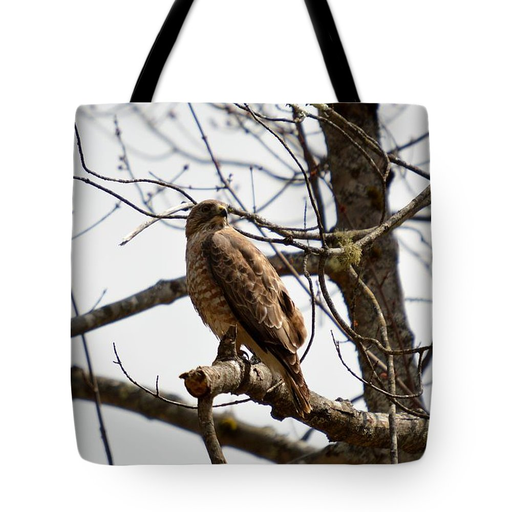 Redtailed Hawk Tote Bag featuring the photograph Red-tailed Hawk by Thomas Phillips