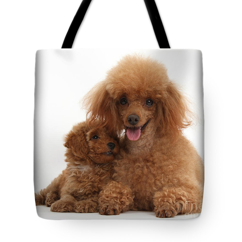 Red Toy Poodle Dog And Puppy Tote Bag