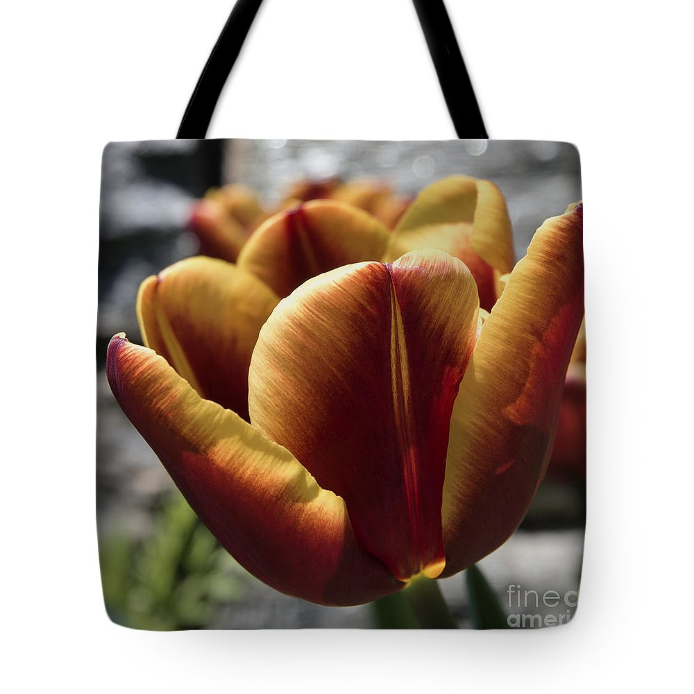 Spring Flowers Tote Bag featuring the photograph Red Tulip 2116 by Terri Winkler
