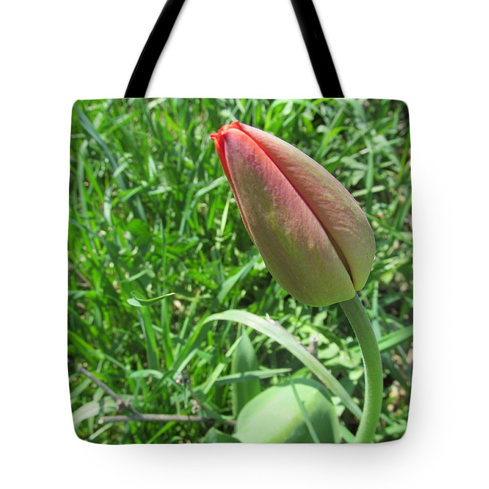 Bud Tote Bag featuring the photograph Red Tulip Bud by Tina M Wenger