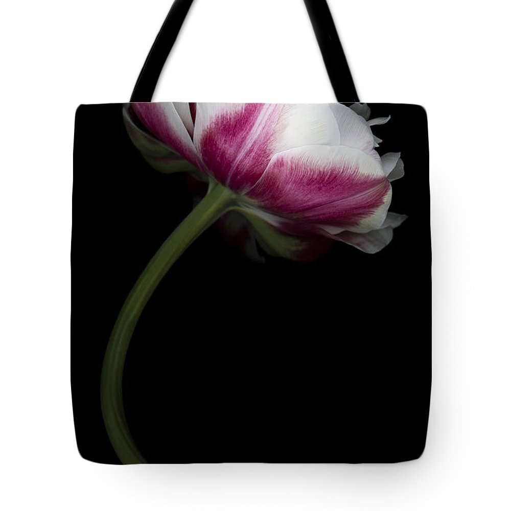 Double Tulip Tote Bag featuring the photograph Red White Double Tulip by Oscar Gutierrez