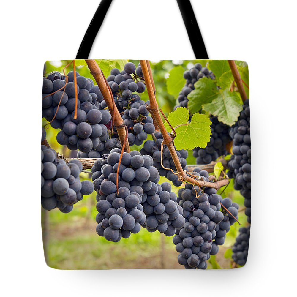Red Tote Bag featuring the photograph Red Wine Vineyard 4 by David Gn