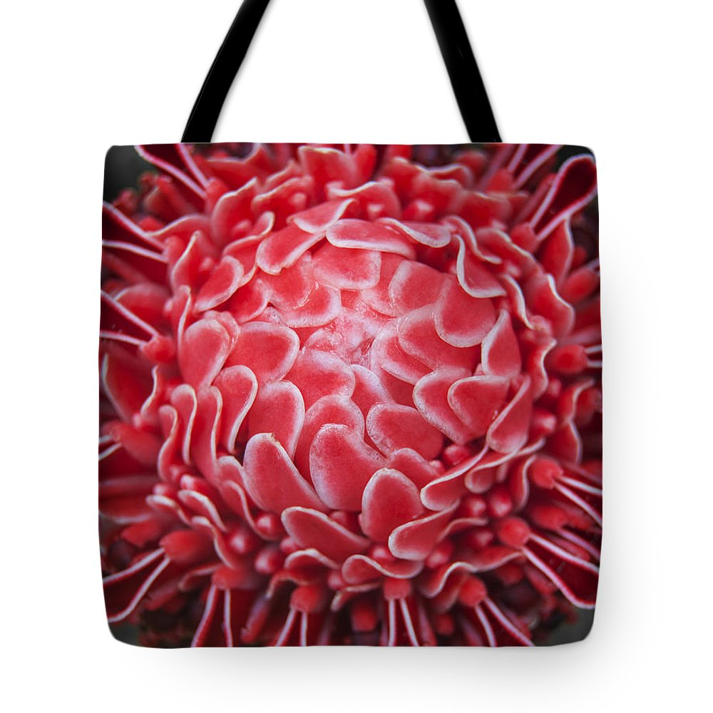 Red Tote Bag featuring the photograph Red Wings by Sher Hortillosa