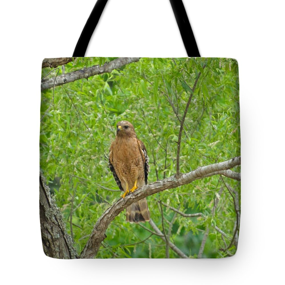 Bird Tote Bag featuring the photograph Red-shouldered Hawk by Donna Brown