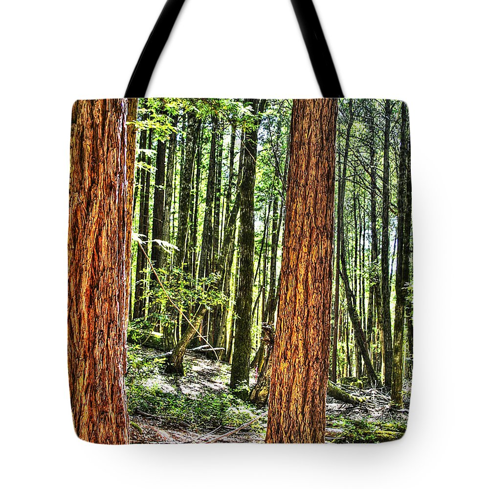 Basin Tote Bag featuring the photograph Redwoods 2 Big Basin by SC Heffner