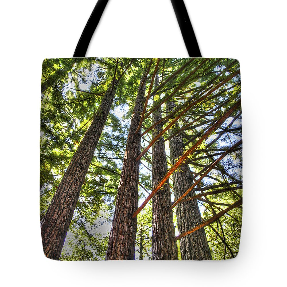 Basin Tote Bag featuring the photograph Redwoods 3 Big Basin by SC Heffner