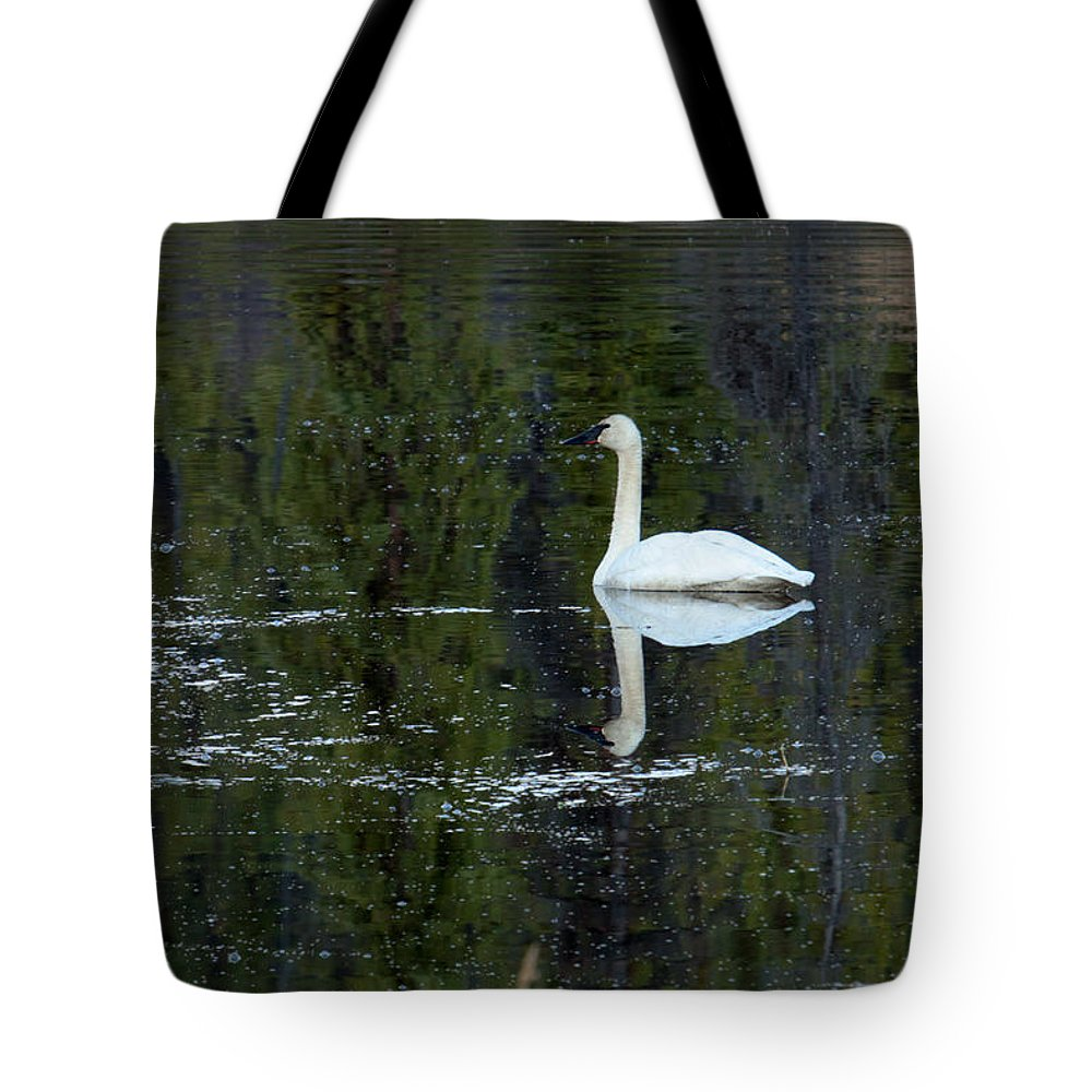 Trumpeter Swan Tote Bag featuring the photograph Reflecting Swan by Thomas Sellberg
