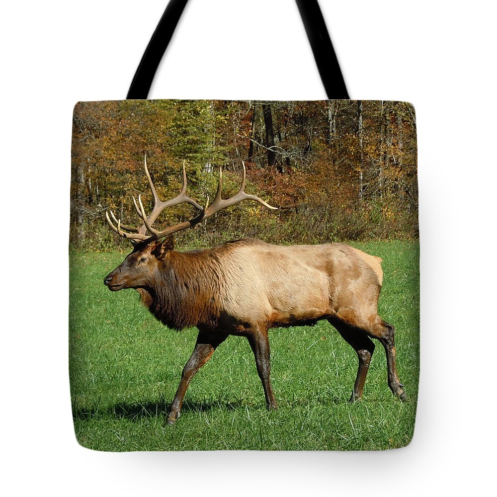 Elk Tote Bag featuring the photograph Regal Beauty by Jean Blackmer