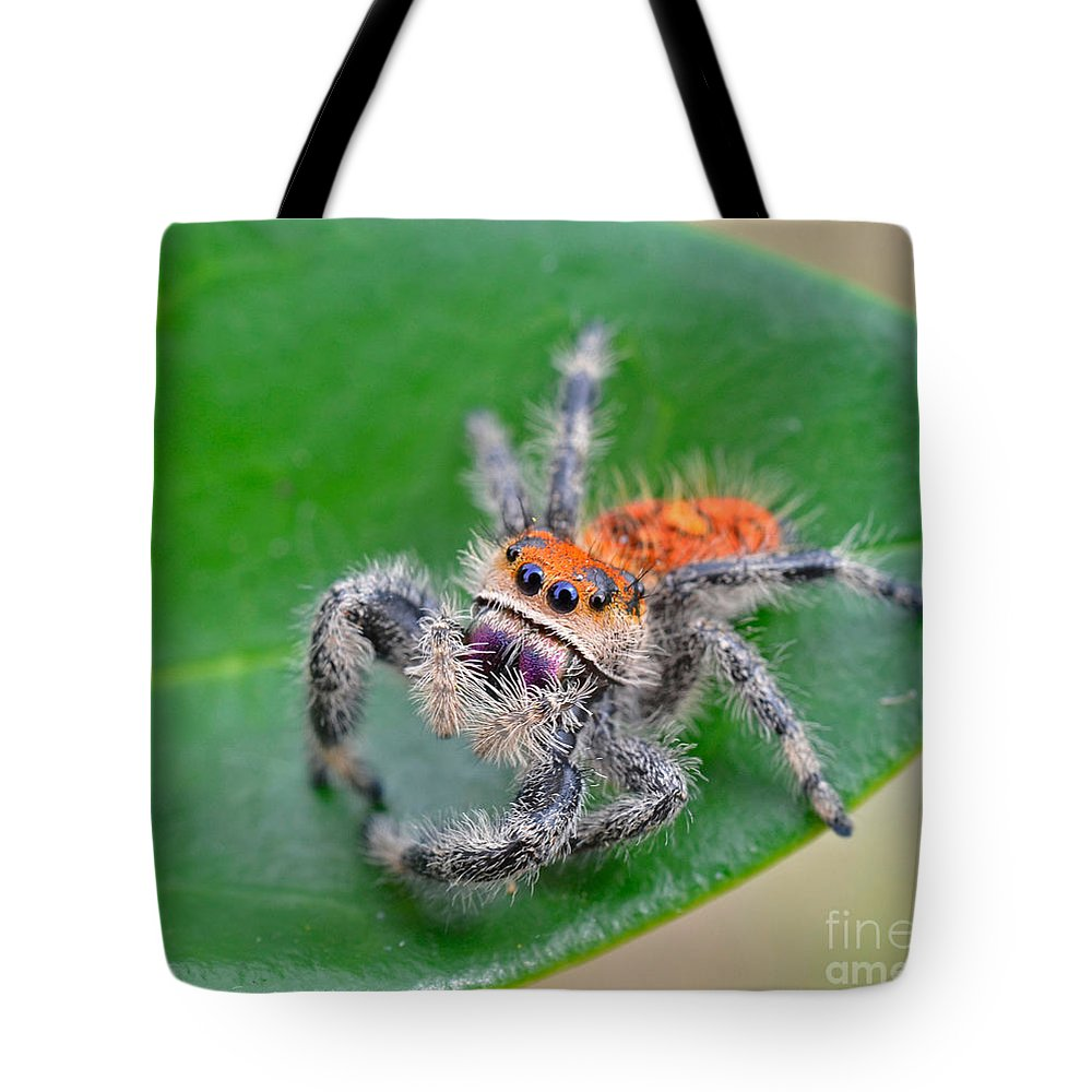 Jumping Spider Tote Bag featuring the photograph Regal Jumping Spider by John Serrao