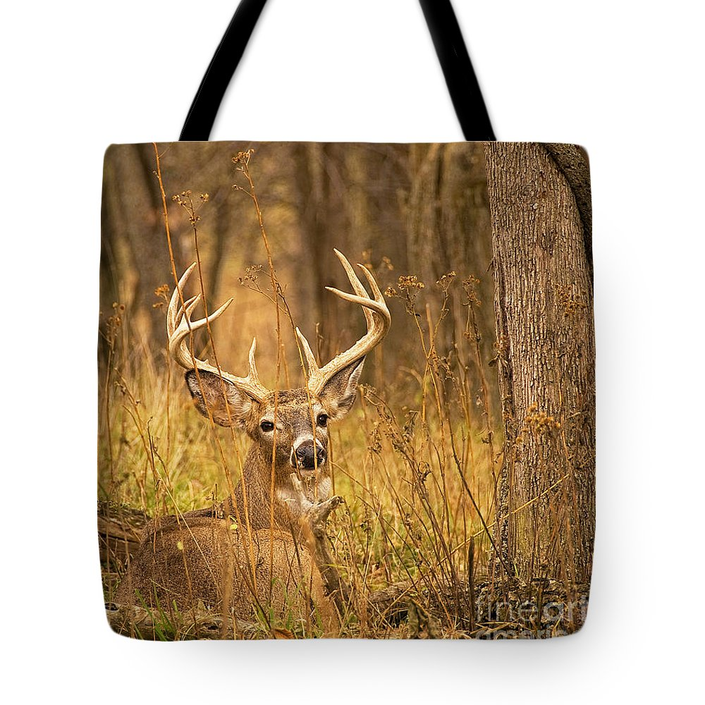 Buck Tote Bag featuring the photograph Resting White-tailed Deer Buck by Timothy Flanigan and Debbie Flanigan Nature Exposure