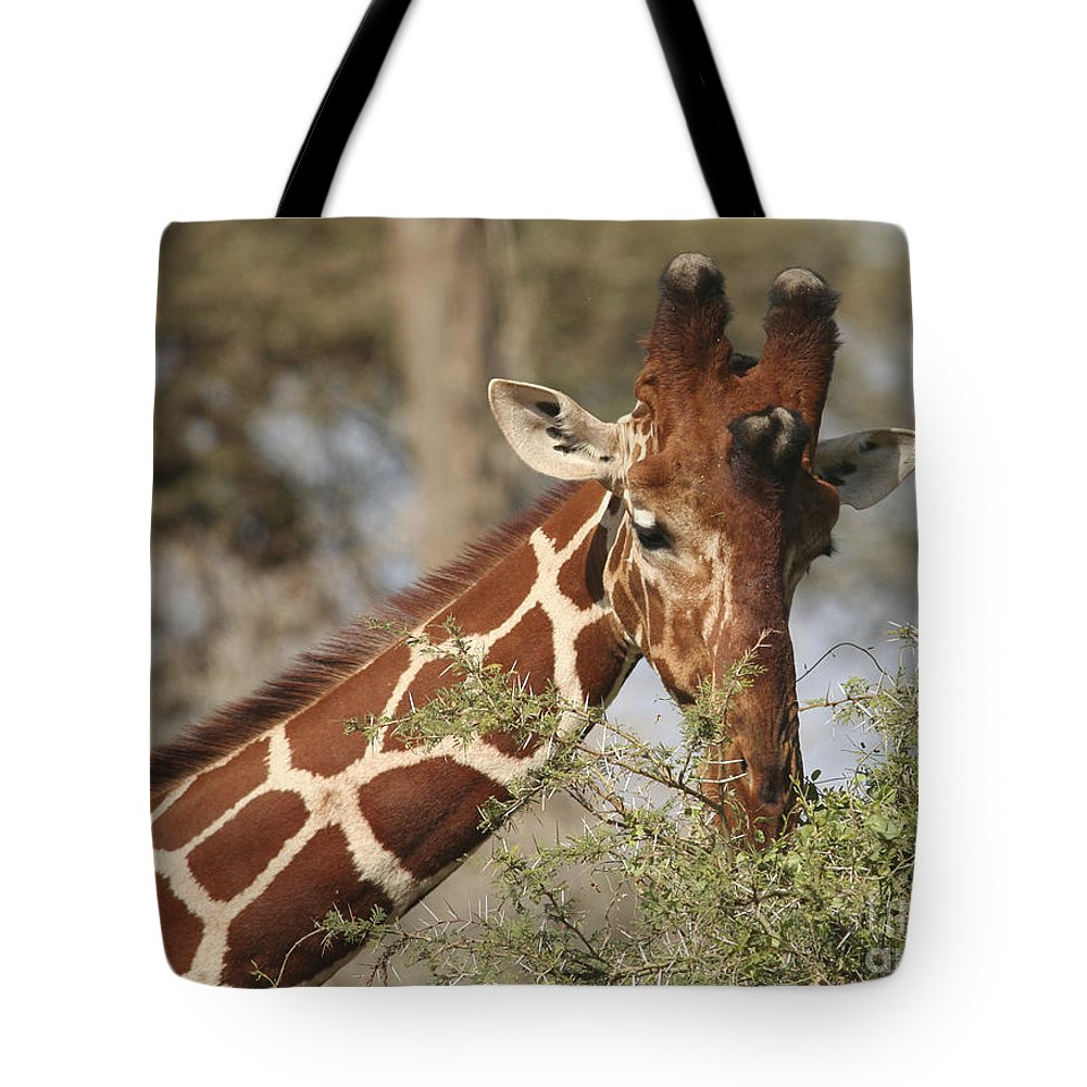 Reticulated Giraffe Tote Bag featuring the photograph Reticulated Giraffe Feeding On Acacia by Liz Leyden