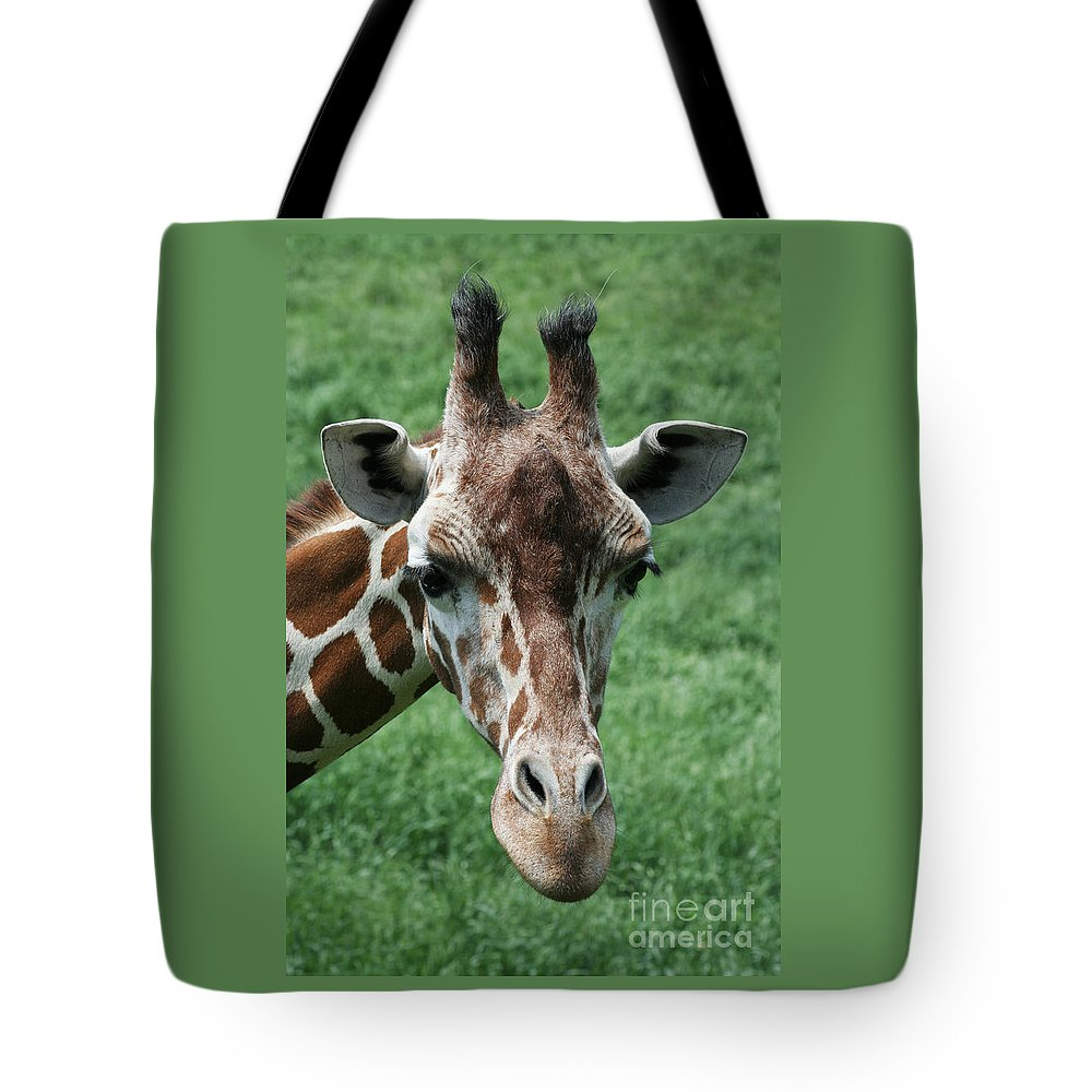 Reticulated Giraffe Tote Bag featuring the photograph Reticulated Giraffe by Judy Whitton