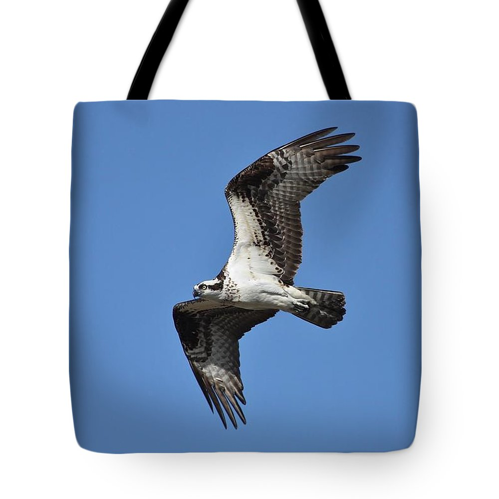 Osrpey Tote Bag featuring the photograph Returning Osprey by Teresa McGill