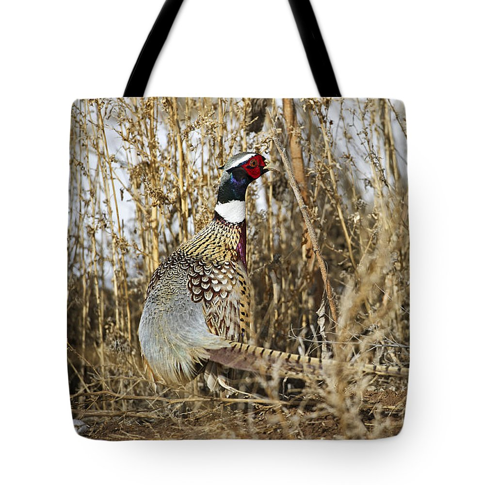 Ringneck Rooster Pheasant Tote Bag featuring the photograph Ring Neck Phesant by Gary Langley