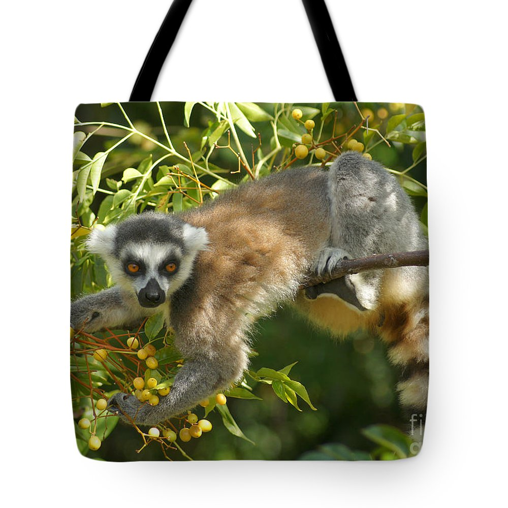 Nature Tote Bag featuring the photograph ring-tailed lemur Madagascar 1 by Rudi Prott