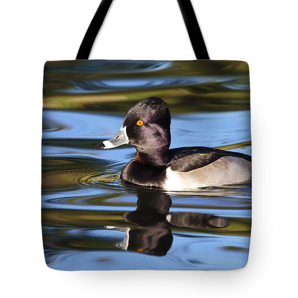 Ring-necked Duck Tote Bag featuring the photograph Rings around Ring-necked Duck by Andrew McInnes