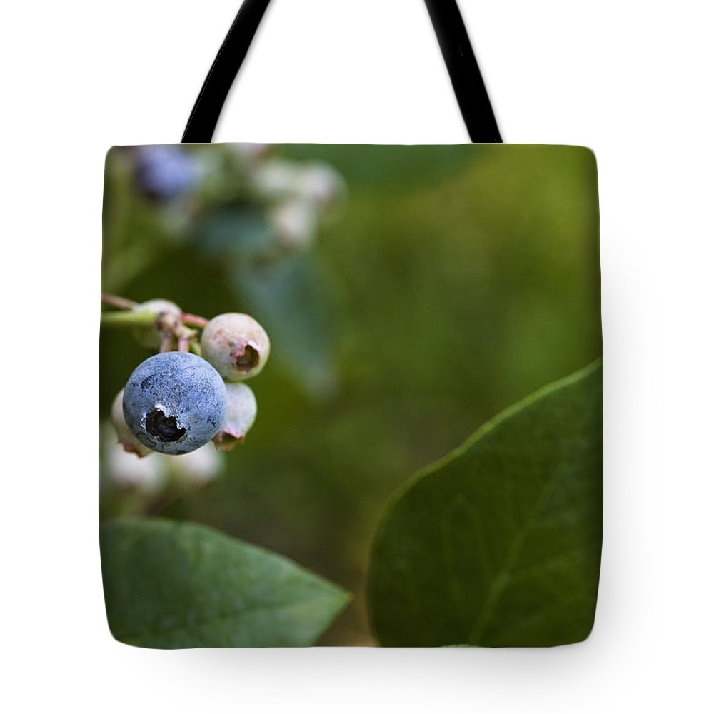 Rabbiteye Tote Bag featuring the photograph Ripening Blueberries by Diane Macdonald