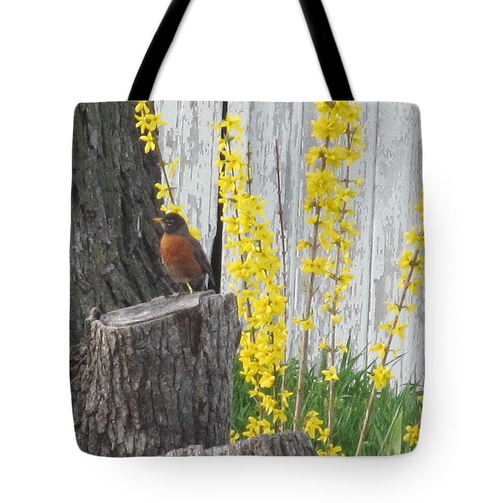 Robin Tote Bag featuring the photograph Robin Resting by Tina M Wenger
