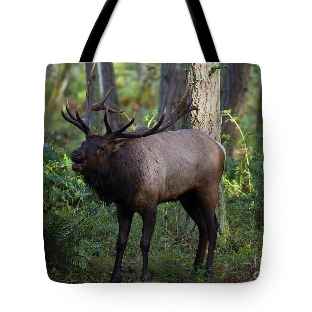 Roosevelt Elk Tote Bag featuring the photograph Roosevelt Elk Bugling by Mike Dawson