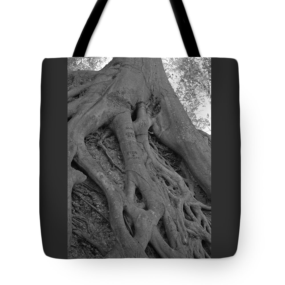 Tree Tote Bag featuring the photograph Roots II by Suzanne Gaff
