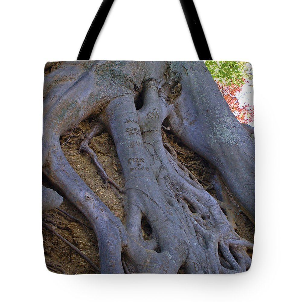 Tree Tote Bag featuring the photograph Roots by Suzanne Gaff