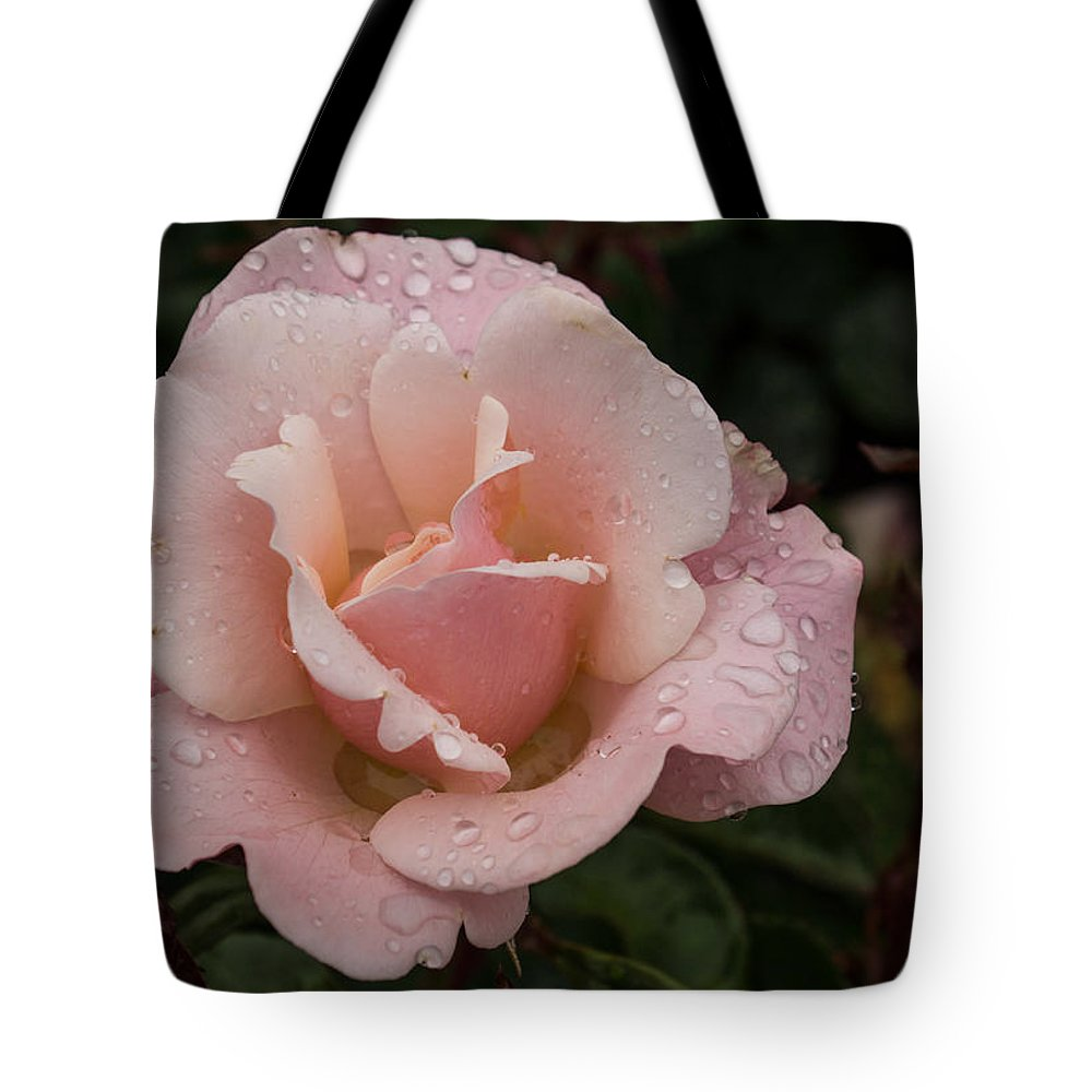 Pink Rose Tote Bag featuring the photograph Rose And Rain - Pale Pink Raindrops by Georgia Mizuleva